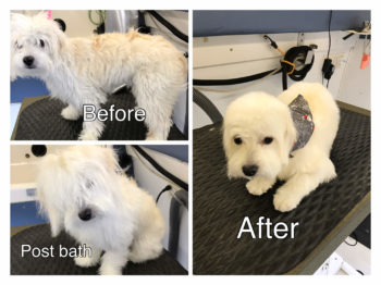 Puppy's very first Grooming